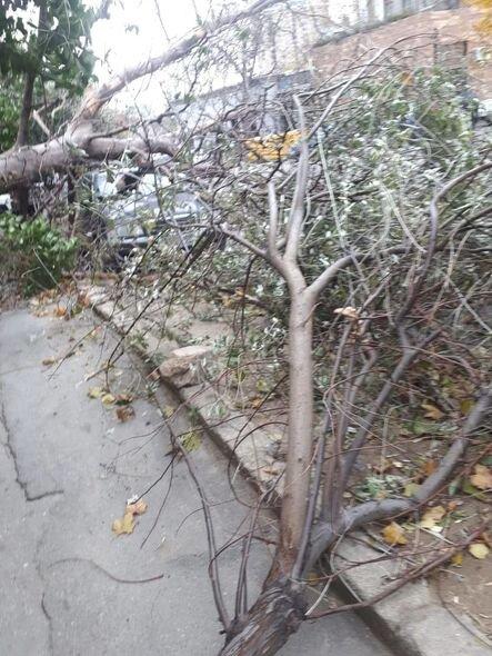 Bakıda güclü külək ağacları maşınların üzərinə aşırdı - FOTO