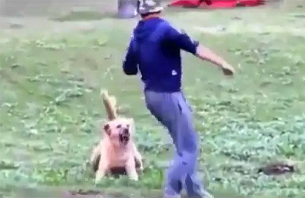 Çoban iti üstünə hücum çəkib, qapmaq istədi – Oğlan iti doğulmağına peşman etdi (Video izlə)