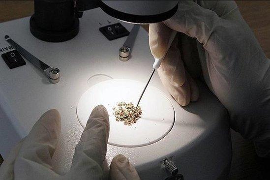 Narkotiklərin hazırlanmasına görə cəzalar dəyişdirilir