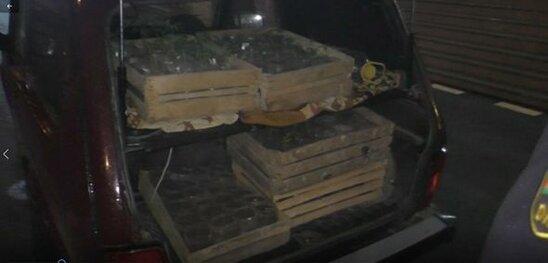 Narkotiki corabinda gizleden shexs ele kecdi - FOTO/VİDEO
